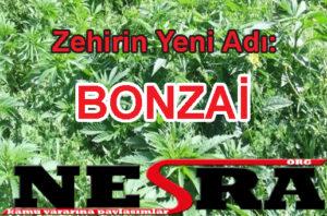 Zehirin Yeni Adı: Bonzai